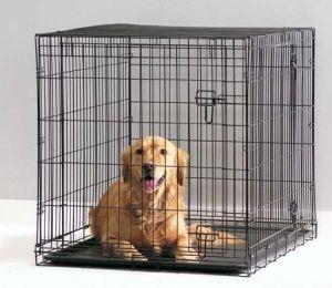 Chiens en cage